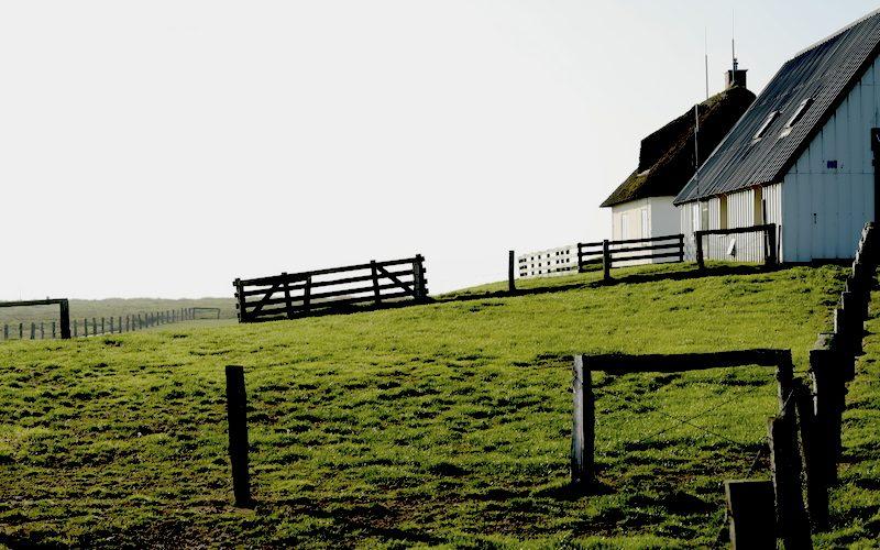 Hamburger Hallig, Nordfriesland, Reußenköge, Leica SL 75mm