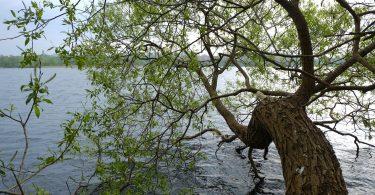 Grebiner See |©weites.land