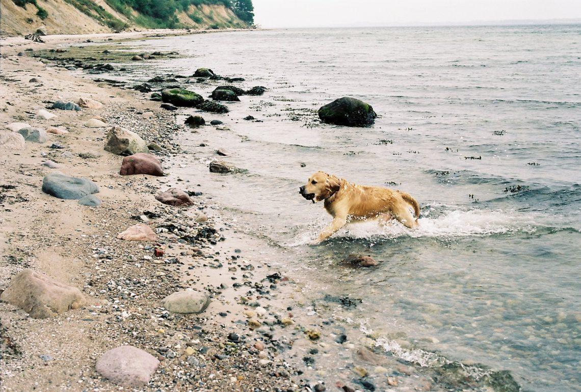 Hundestrand Noer