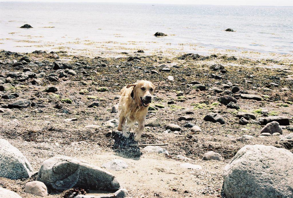 Leo, unser Hundestrandexperte | © weites.land