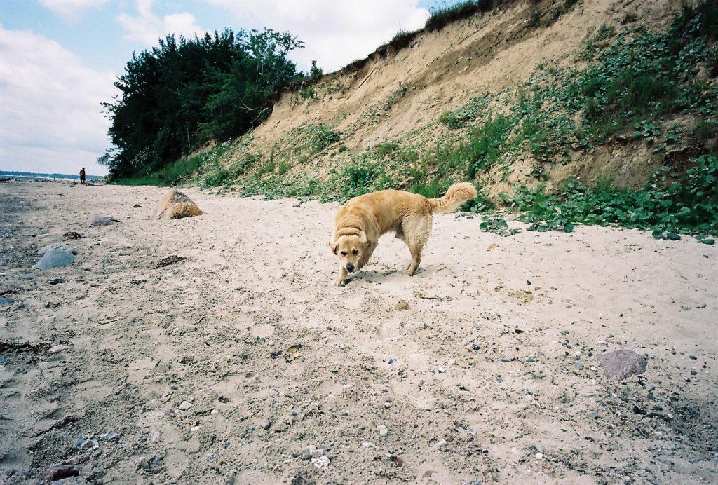 Hundestrand Sierksdorf |© weites.land