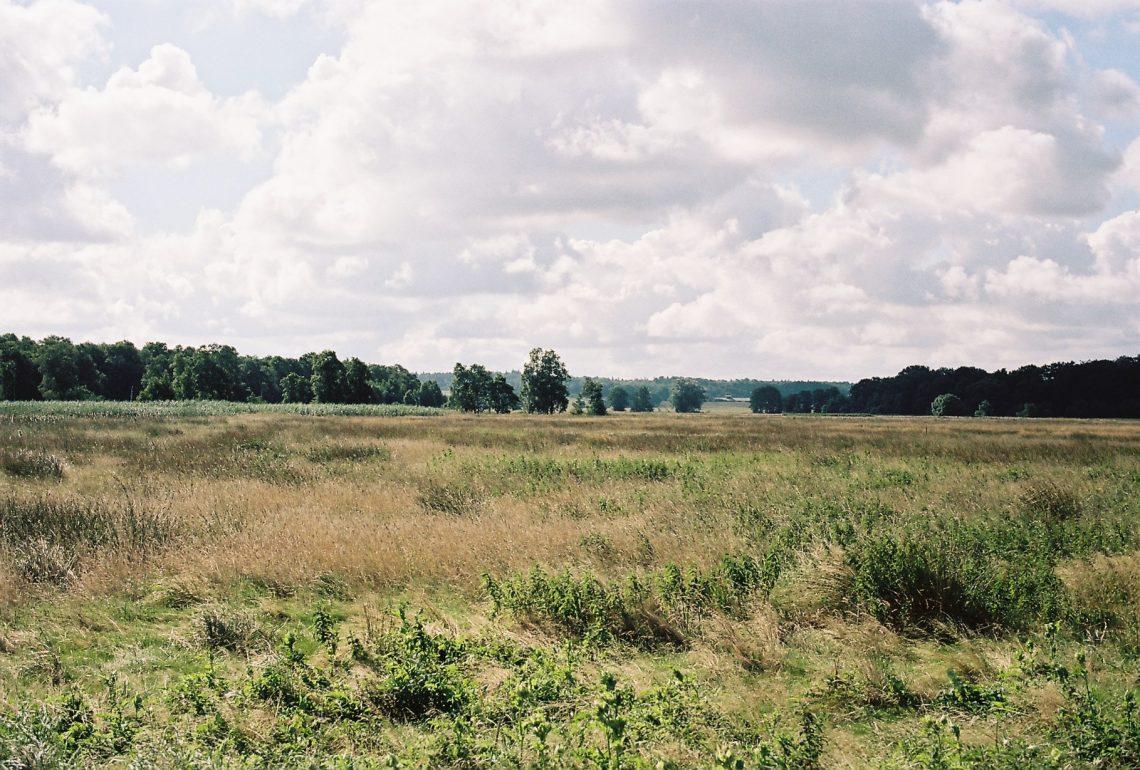 Heidmoor   © weites.land