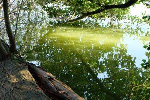 Hemmelmarker See | © weites.land