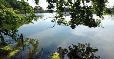 Peper See - Seen in Schleswig-Holstein |©weites.land