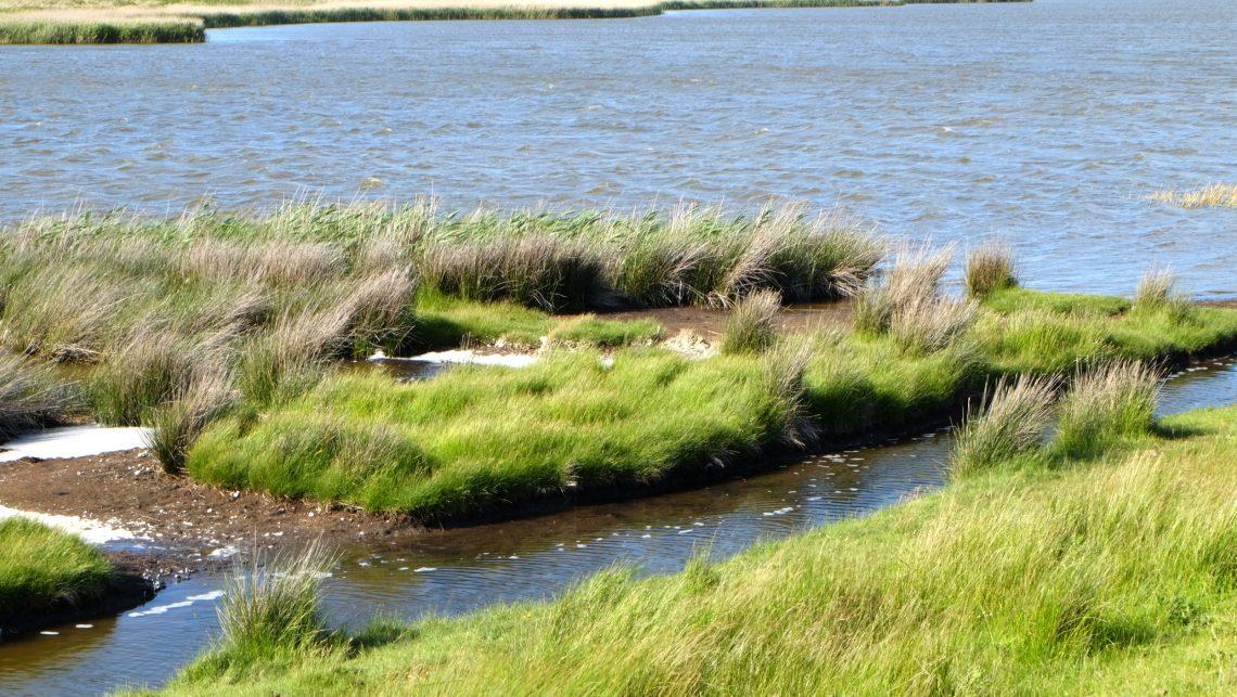 Salzensee – Seen in Schleswig-Holstein |©weites.land