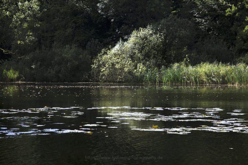 Stubbenteich – Seen in Schleswig-Holstein |© www.lydisignphotography.de