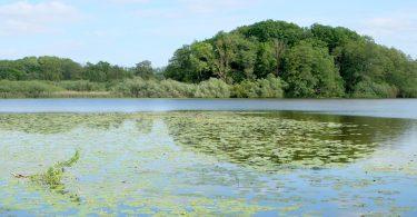 Schulensee – Seen in Schleswig-Holstein |©weites.land