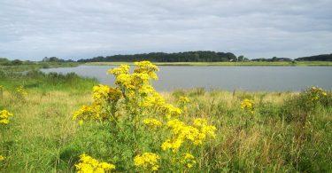 Winderatter See – Seen in Schleswig-Holstein  ©weites.land