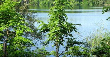 Plußsee - Seen in Schleswig-Holstein |©weites.land