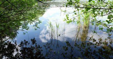 Drachensee in Kiel - Seen in Schleswig-Holstein |©weites.land