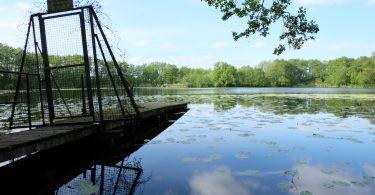 Rammsee (Gemeinde Molfsee) - Seen in Schleswig-Holstein |©weites.land