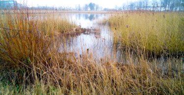 Holmer Noor in Schleswig – Seen in Schleswig-Holstein |©weites.land
