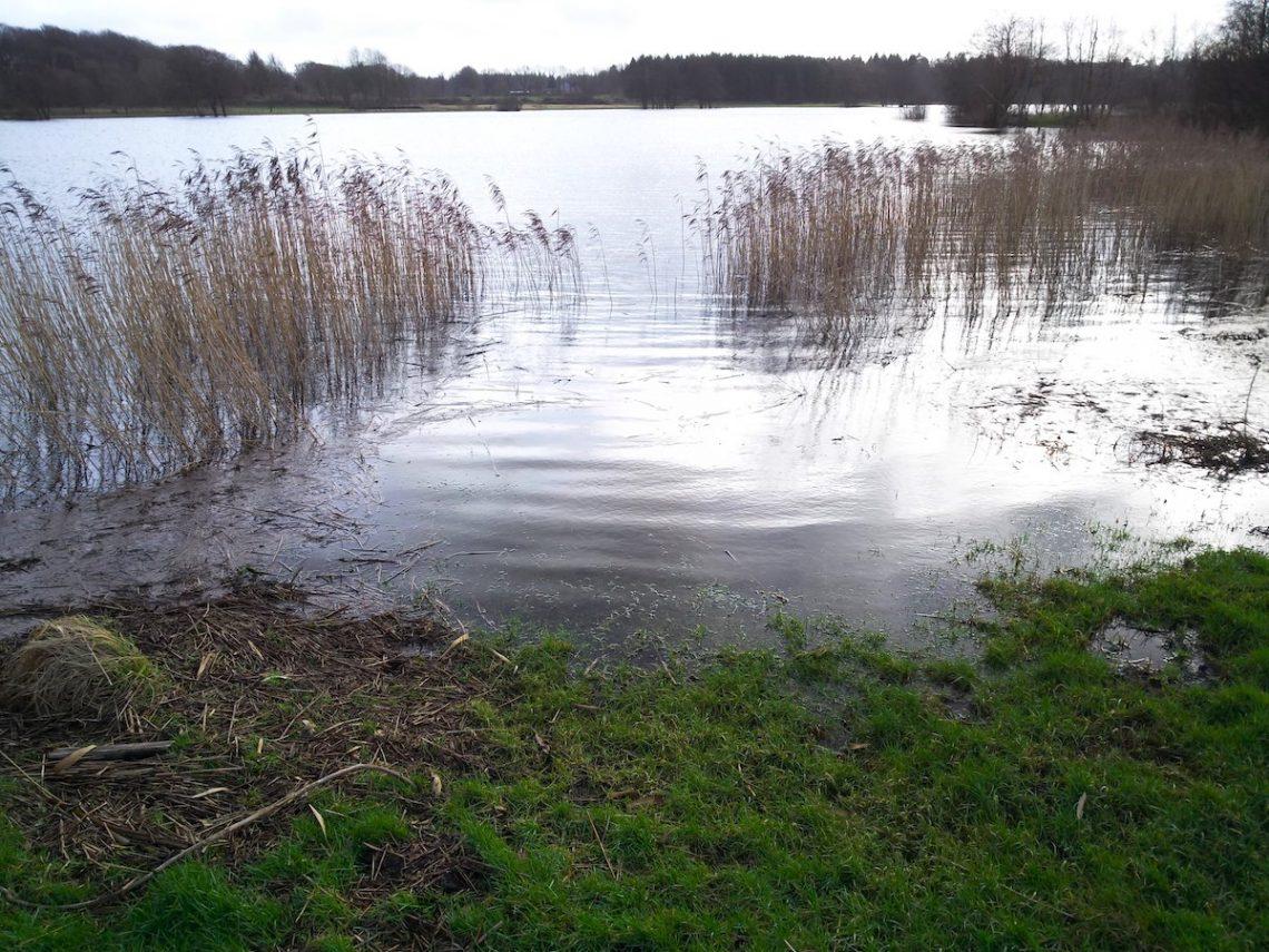 Engbrücksee bei Bollingstedt – Seen in Schleswig-Holstein |©weites.land