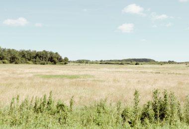 Fröslev-Jardelunder Moor | Moore in Schleswig-Holstein |©weites.land