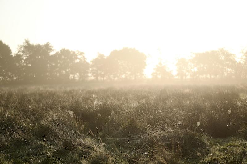 Fröslev – Jardelunder Moor, Leica SL 75mm