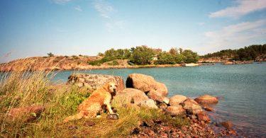 Mit unserem Hund auf Åland |©mare.photo
