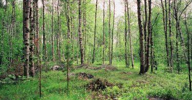 Taiga, Pasvikdal, Leica M Elmarit 2.8 28 asph., Kodak Ektar | © mare.photo