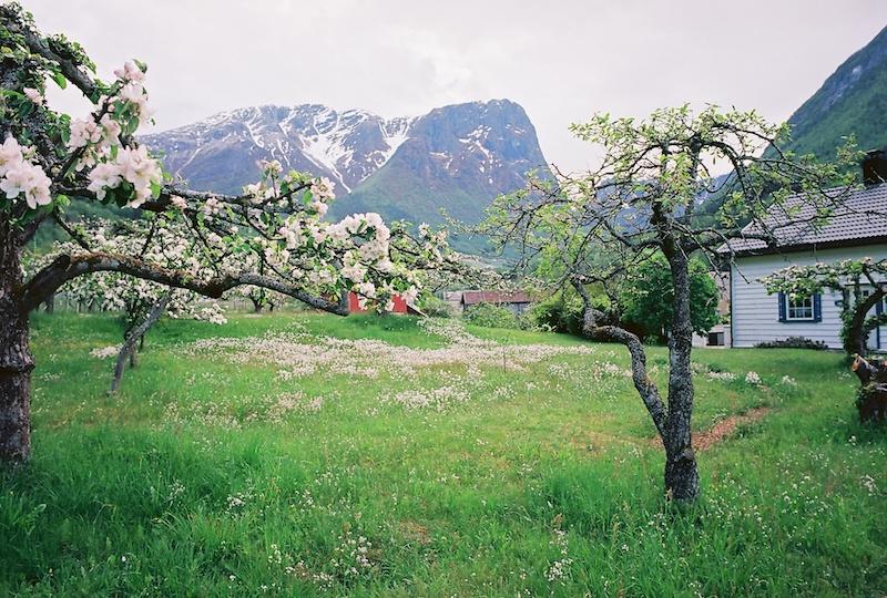 Fresvik-Sognefjord-Kodak-Ektar-1.jpg