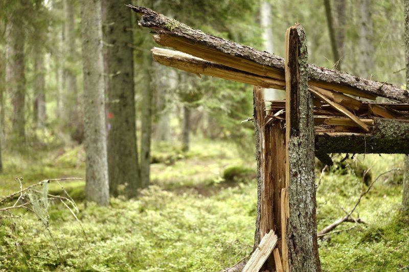 Wald ist gesund, Småland, Ryfors, Stråken, Mullsjø, Leica SL 75mm