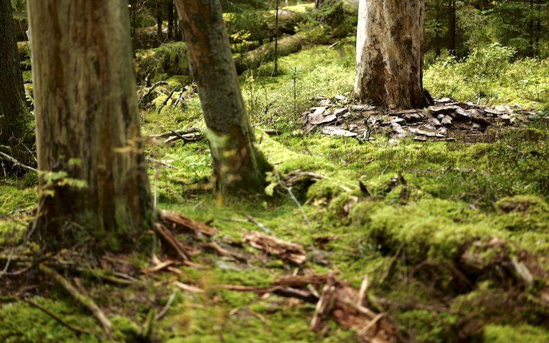 Wald ist gesund, Småland, Mullsjø, Leica SL 75mm