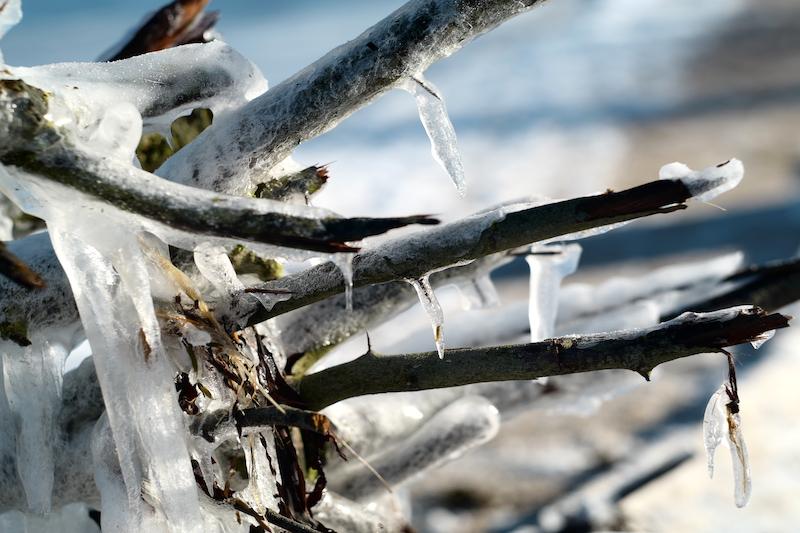 Holnis Winter Flensburger Förde, Fördesteig