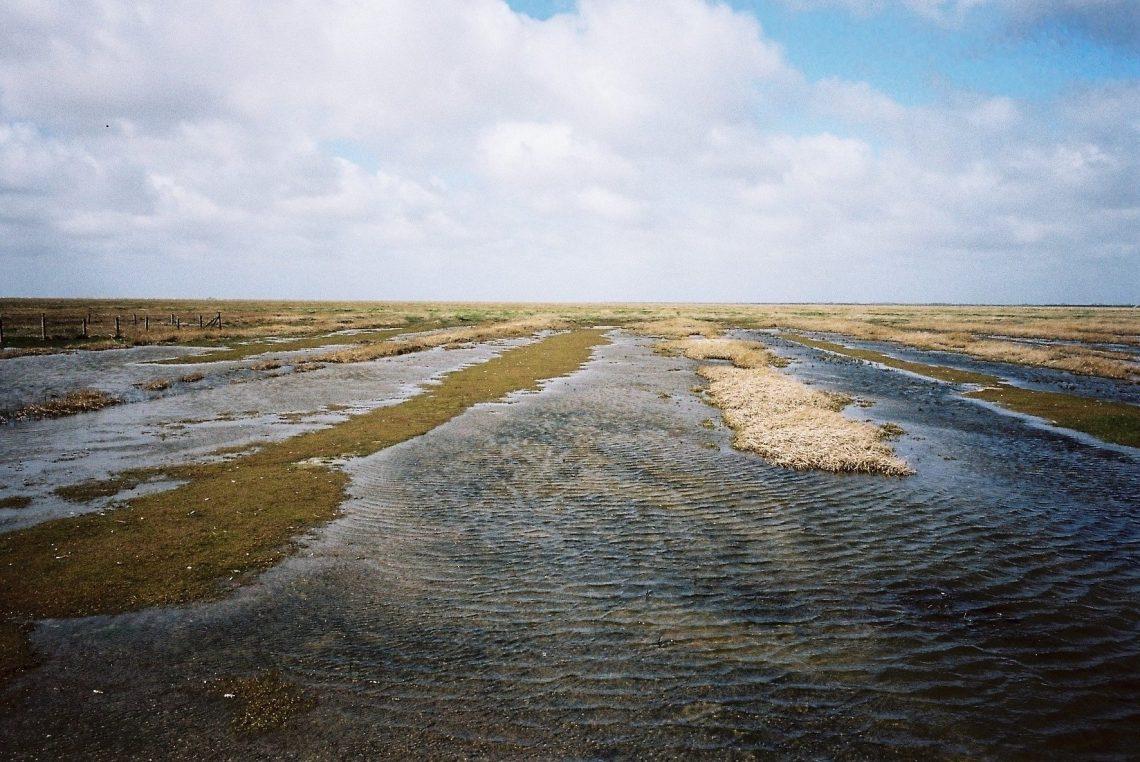 Hauke-Haien-Koog