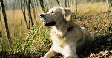 Kategorie Hundestrände